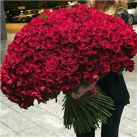 bouquet-of-500-red-roses_large
